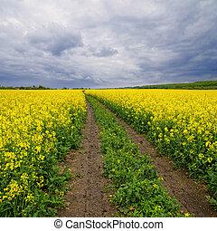 champs, par, colza, route, terre