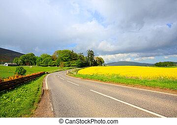 champs, printemps, ecosse, route, conutry, colza