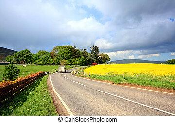 champs, route rurale, colza, écossais