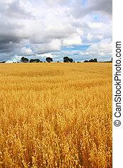 champs, rural, blé, paysage, scénique