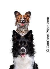 chat, verticalement, une, haut, deux, chiens, entassé, portrait