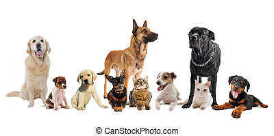 chiots, chats, groupe