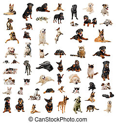 chiots, chiens, chats