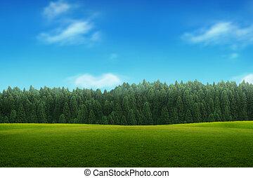 ciel bleu, jeune, paysage, forêt verte