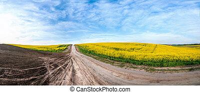 ciel, colza, route, sous, bleu, champs, fleur, terre
