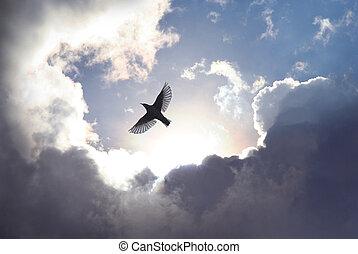 ciel, oiseau, ange