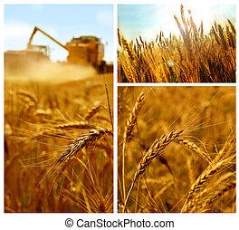 collage, grain