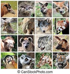collage, mammifères, animal