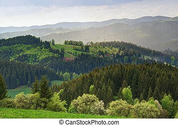 collines, campagne, forêts, vert, région montagneuse, prés