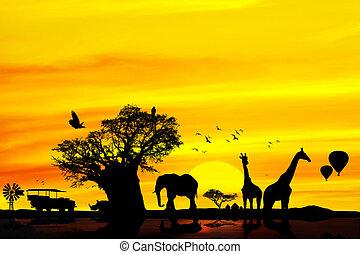 conceptuel, backround., safari, africaine