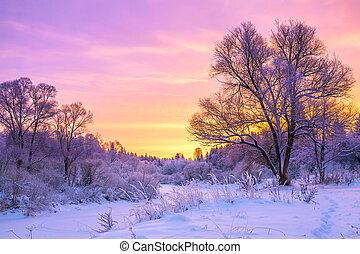 coucher soleil, forêt, paysage, hiver