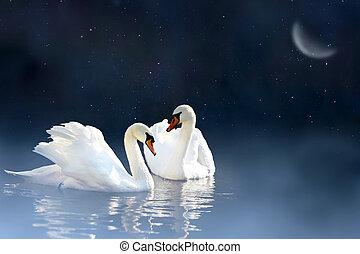 couple, cygne
