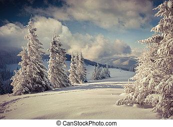 couvert, hiver, paysage neige, arbres., beau
