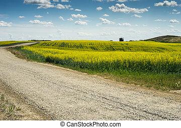 croisement, champ, route gravier, canola