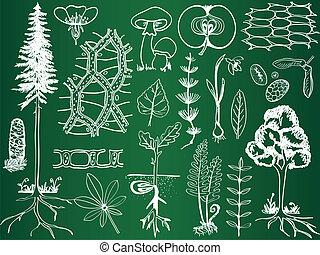 croquis, botanique, biologie, école, -, plante, illustration, planche