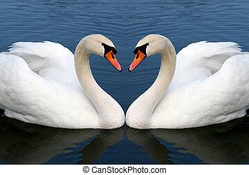 cygne, amour