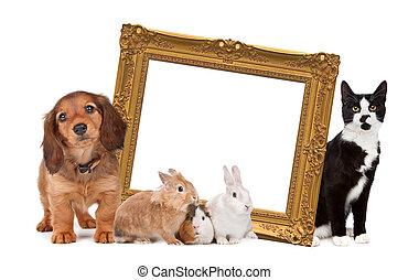 debout, image, groupe, autour de, doré, cadre, animaux familiers