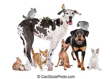 devant, fond, animaux familiers, blanc