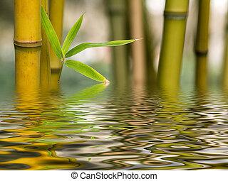 eau, bambou, reflet