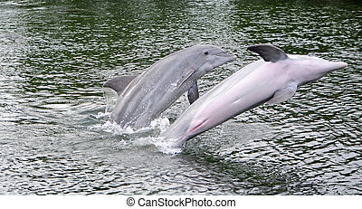 eau, dolpins, couple
