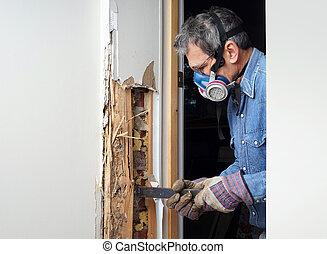 endommagé, mur, enlever, termite, bois, homme