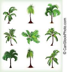 ensemble, arbres., illustration, vecteur, paume, divers
