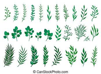 ensemble, branches, arbre, feuilles, vert
