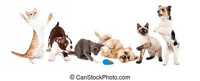 espiègle, chats, groupe, chiens