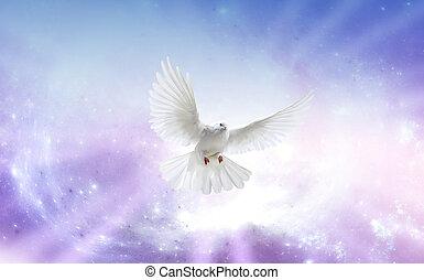 esprit, saint, colombe