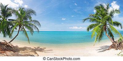 exotique, panoramique, noix coco, plage, paume