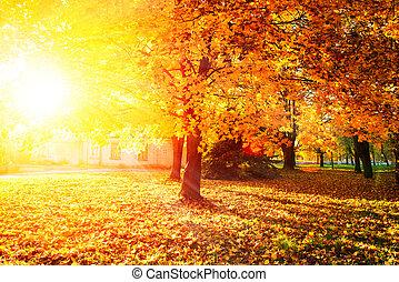 feuilles, automnal, arbres, automne, fall., park.
