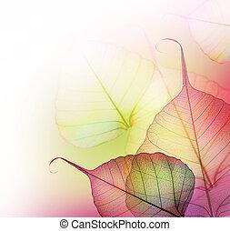 feuilles, border., beau, floral
