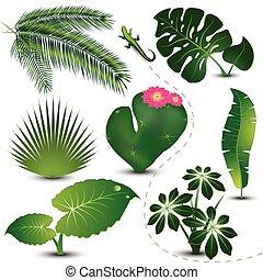 feuilles, collection, exotique