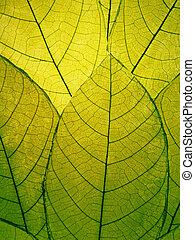 feuilles, délicat, détail, vert