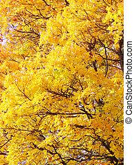 feuilles, fond, jaune