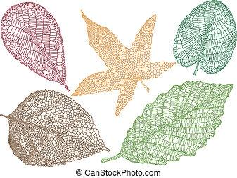 feuilles, vecteur, automne
