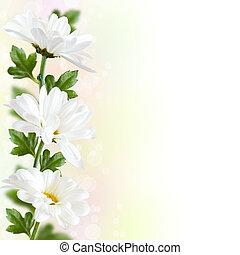fleur, border.