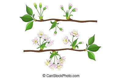 fleur, branches, pomme, ensemble, cerisier, illustration, fleur, vecteur, fleurir, étapes, ou
