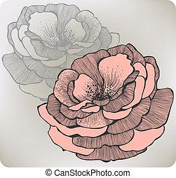 fleur, illustration., rose, vecteur, sauvage, hand-drawing.