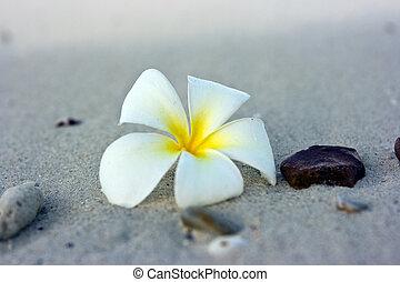 fleur, plage