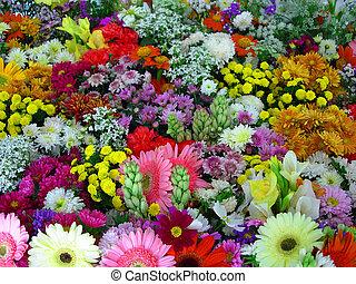 fleurs, exposition