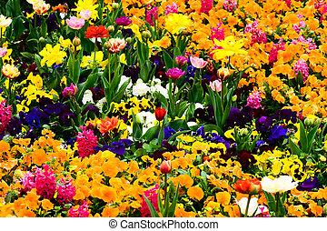 fleurs, jardin, entiers