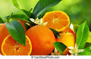 fleurs oranges, fruits
