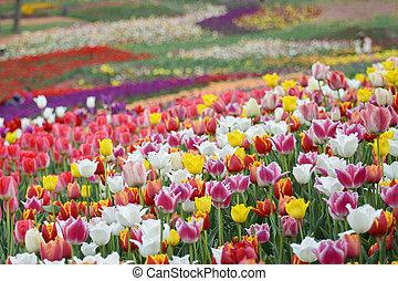 fleurs, printemps, fond