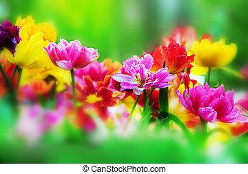 fleurs ressort, jardin, coloré
