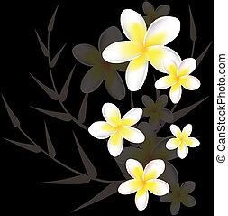 floral, frangipanier, résumé, vecteur, fond
