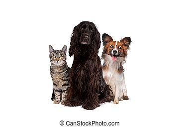 fond, une, chat, tabby, devant, chiens, séance, deux, blanc