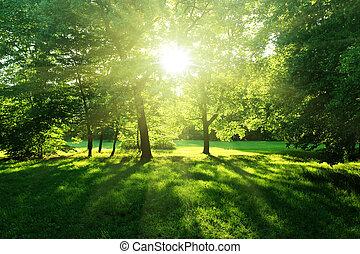 forêt, été, arbres