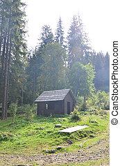 forêt, construit, wood., naturel, maison, petit, localisé, bâtiment
