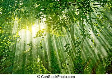 forêt, sunlights, magie